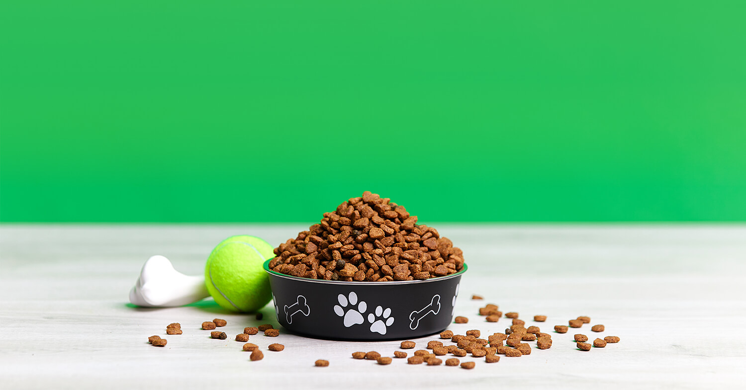 bowl of dog food and toys