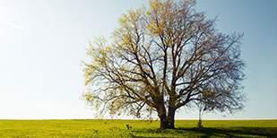 Sc small img tree